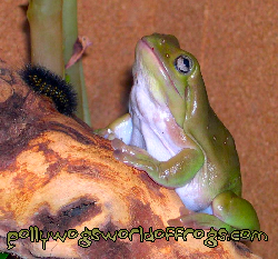 Pollywogs World Of Frogs